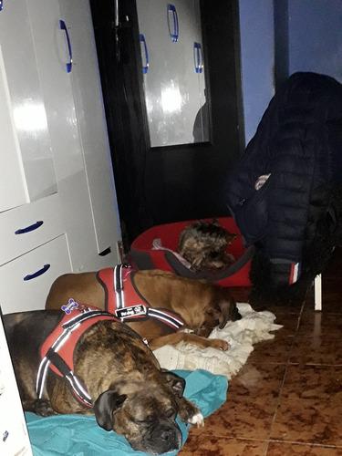 guarderia canina, como  si estuviera en tú  casa