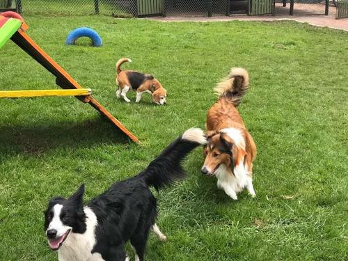 guardería canina dog's life