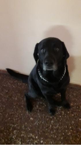 guardería canina en casa de familia sin caniles