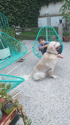 guarderia canina en villa urquiza