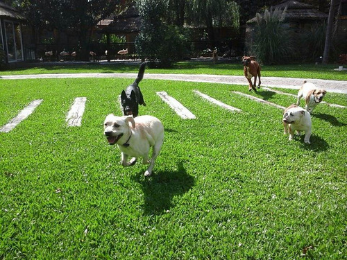 guarderia canina- hotel canino campo bianco