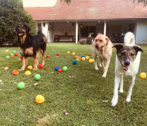guarderia canina lo de feli - pilar