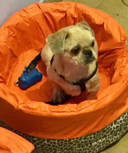 guardería canina para perros pequeños,en capital, tipo hotel