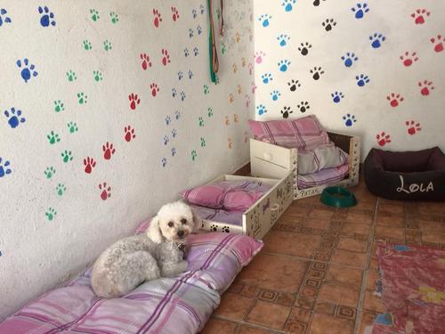 guarderia canina/ patas sucias, los cuidamos en casa.