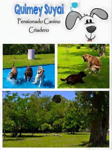 guarderia canina pensionado  quimey suyai