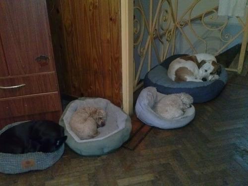 guarderia canina perritos felices