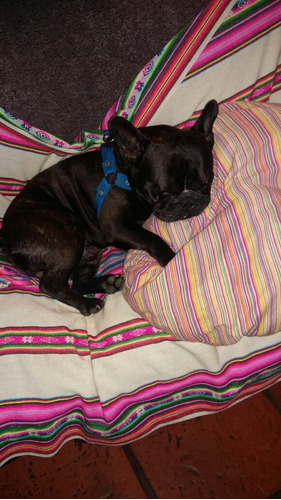 guardería canina razas pequeñas   sin caniles ni jaulas!!