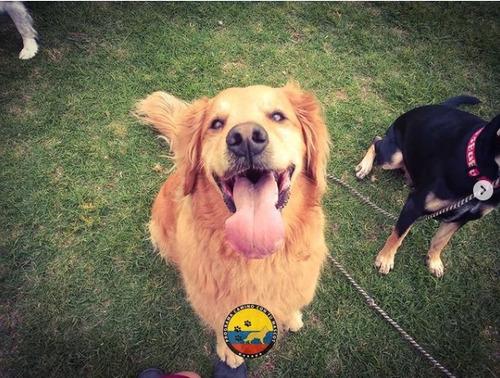 guarderia canina - servicio baño y peluqueria canina