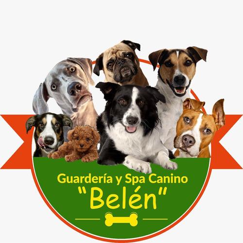 guardería canina sin caniles