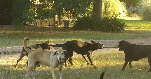 guardería canina sin caniles como en casa