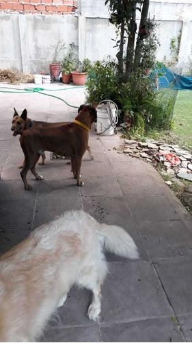 guarderia canina y felina  familiar, sin jaulas