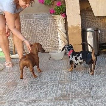guardería canina y felina penny moron zona oeste