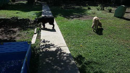 guardería canina y paseos  zona sur