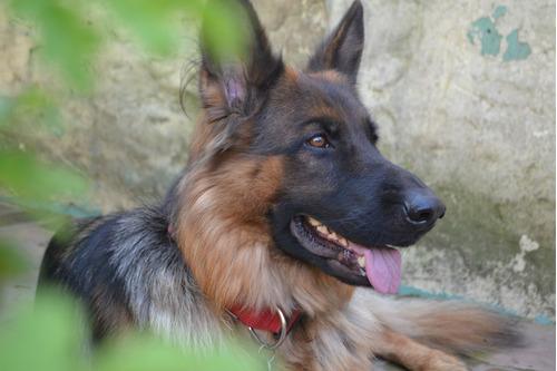 guarderia canina zona norte