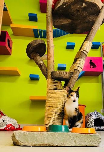 guardería felina - pensionado gatos - hotel spa