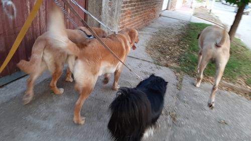 guardería gatuna y pequeños canes