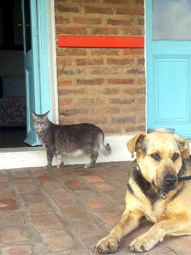 guardería hotel canino felino