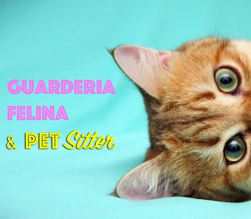 guardería para gatos pensionado felino capital tramite senas