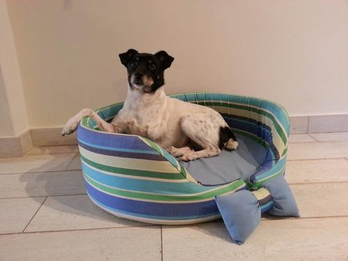 guarderia pension canina paseos saavedra urquiza nuñez caba