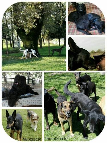 guarderia pensión canino don mariano (sin jaulas) descuentos