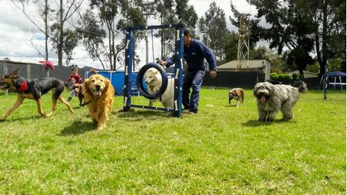 guardería y adiestramiento canino bogotá