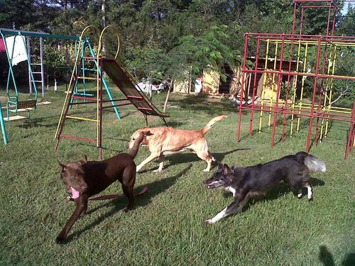 guarderia y pensionado canino