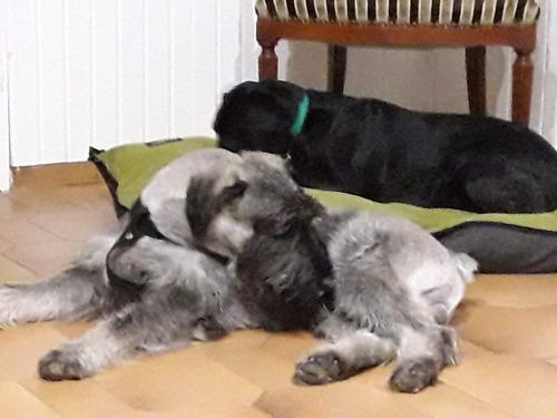 guardería y pensionado canino