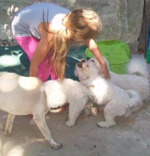 guarderia y pensionado canino como en casa !!! en olivos