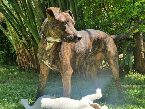 guarderia y pensionado canino promoción enero 2020