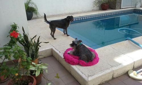 guarderia y pensionado canino sin traslado en casa familia