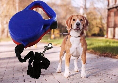 guia cachorro coleira