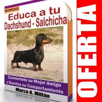 guía de entrenamiento para perro salchicha 2