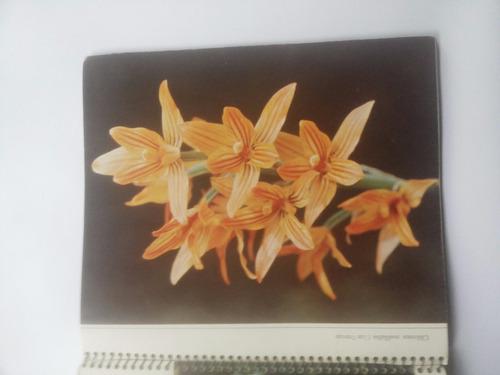 guía flores de chile.1974.