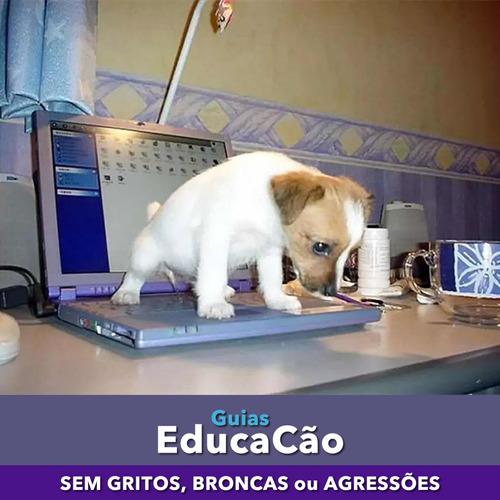 guias educacão adestramento de cães