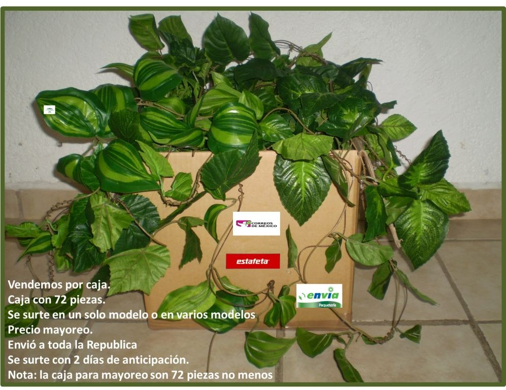 Guias enredaderas en mercado libre for Cuales son las plantas decorativas