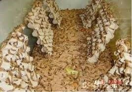 gusanos alimento vivo y golosina para tu mascota