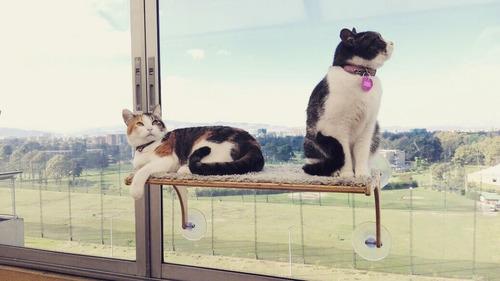 hamaca de ventana para gatos tipo repisa