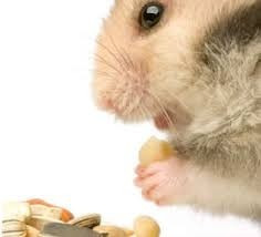 hamster 6 bolsas de aserrin y 3 kgs de alimento