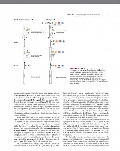 harper bioquímica ilustrada pdf hd 29 edición