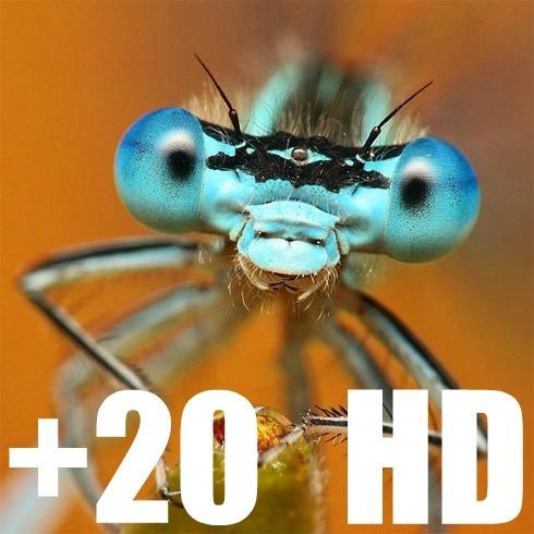 hd extreme super macro +20 lente close-up fullhd 55mm 58mm