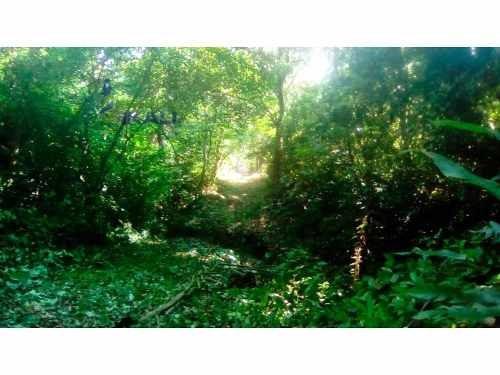 hectáreas en venta en carretera a cazones papantla veracruz, se encuentran ubicadas en la carretera a cazones en el km 47 de papantla, es un terreno de 20 hectáreas, son 200 m. de frente a la carrete