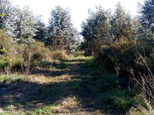 hectareas en virrey del pino