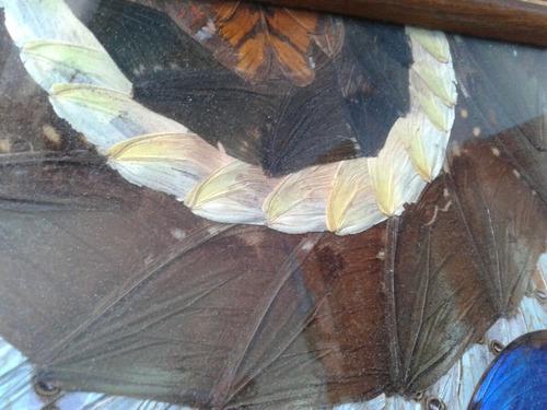 hermosa bandeja decorada con alas de mariposas