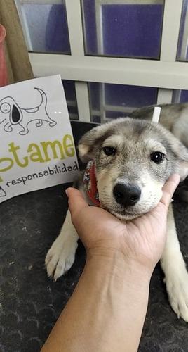 hermosa cachorrita en adopción