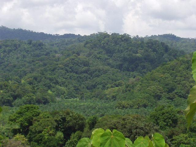 hermosa finca ecológica:precio de oportunidad, recibo oferta
