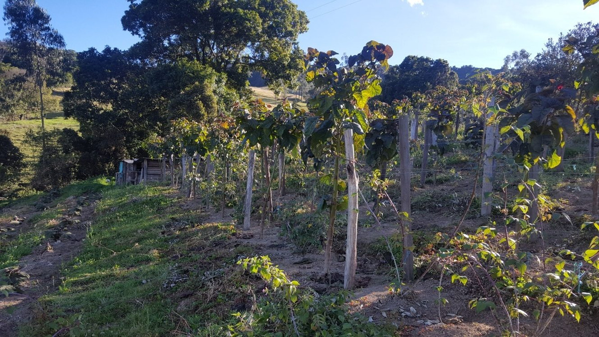 hermosa finca via paipa - palermo 17200 m2. arboles frutales