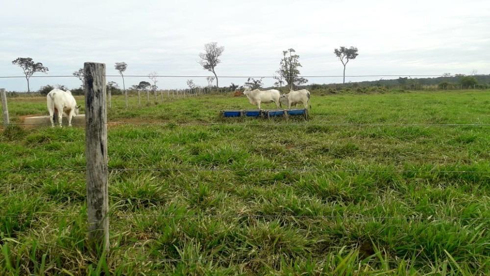 hermosa proiedad ganadera y agricola en concepcion