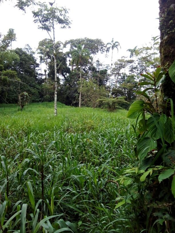 hermosa propiedad 109.10 hectáreas gonzalo pizarro