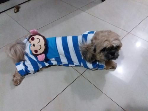 hermosa ropa para tu mascota