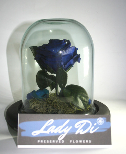 hermosa rosa eterna o preservada en cúpula de cristal baja